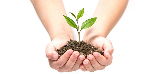 manos-sosteniendo-planta